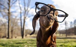 A Try-hard Fuckwit Goat