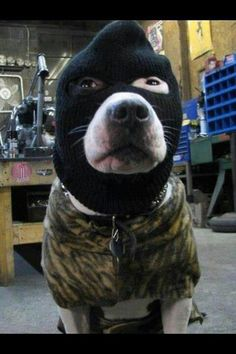 dog-in-balaclava